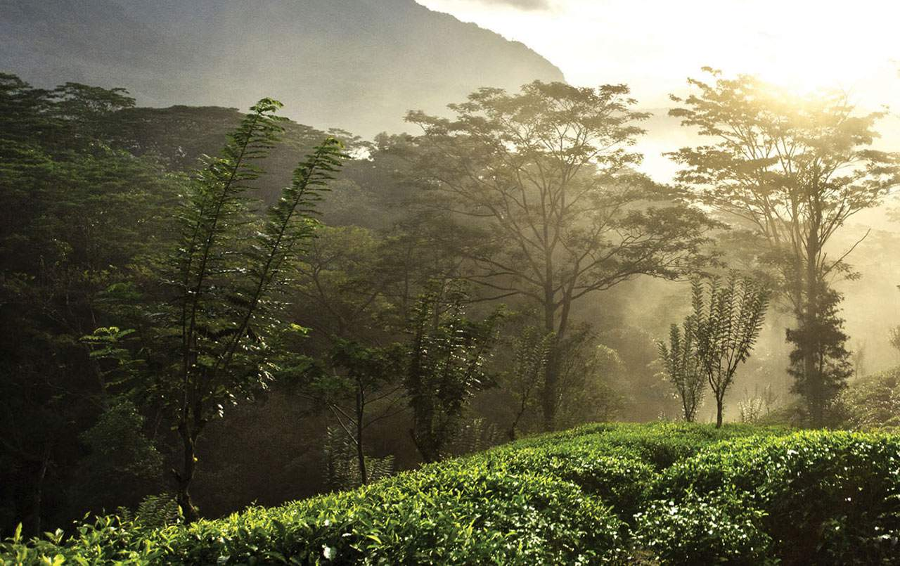Ratnapura-Region-Single-Region-Earl-Grey-tea.jpg